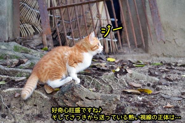 ニャポ旅39 初夏の尾道ぶらり猫巡り その5