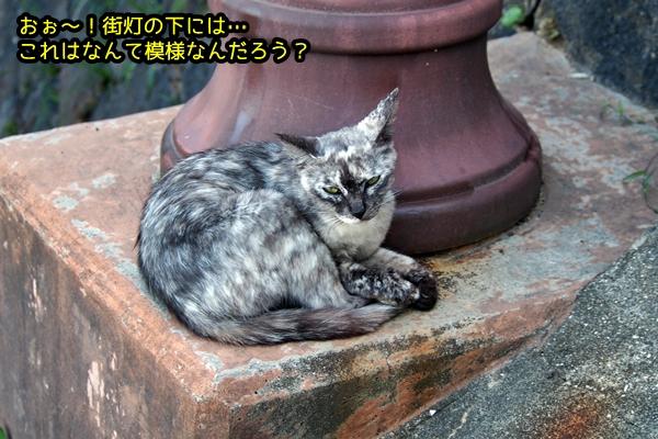 ニャポ旅39 初夏の尾道ぶらり猫巡り その6