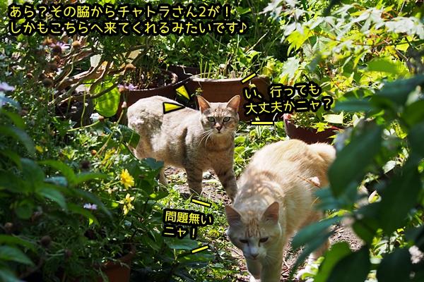 ニャポ旅39 初夏の尾道ぶらり猫巡り その7