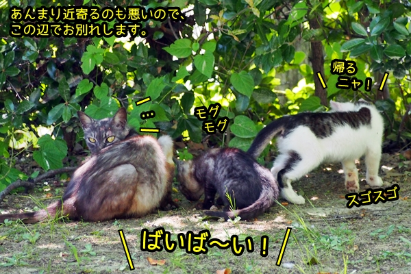 ニャポ旅39 初夏の尾道ぶらり猫巡り その9