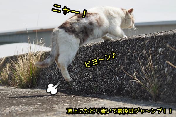 ハイシロ猫さん 坂を上がる