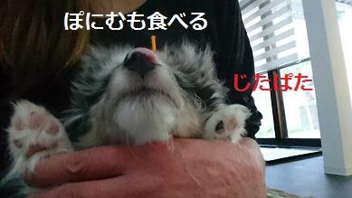 DSC_0126_2017051923540529e.jpg