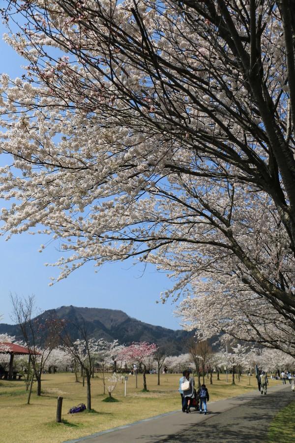 春の休日Ⅱ