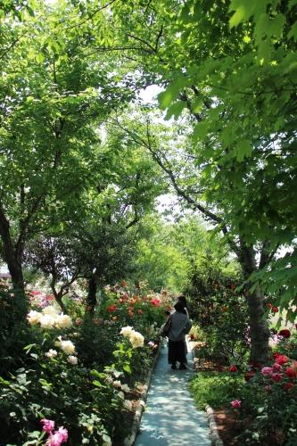 姫路バラ園