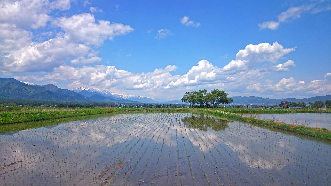山と田んぼ 2