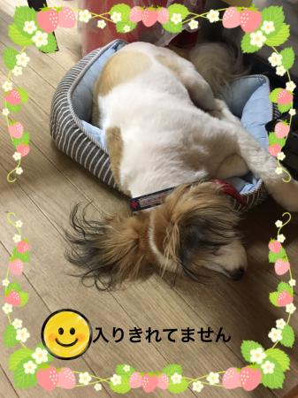 fc2blog_201706181013349c1.jpg