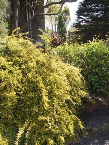 my-garden 040 (4)