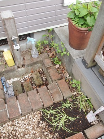 my-garden 003 (3)