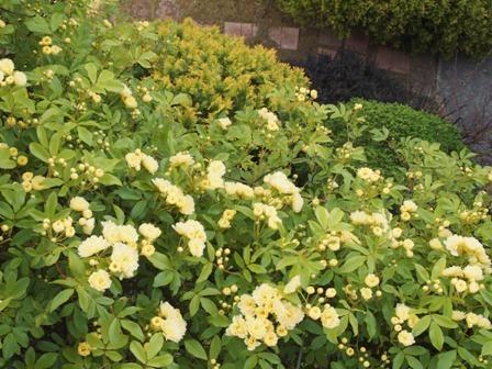 my-garden 024