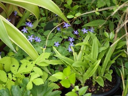 my-garden 016