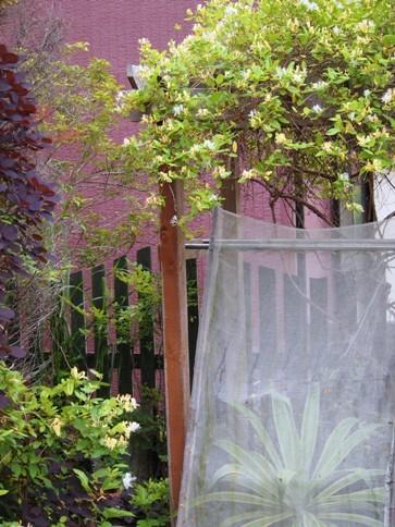 my-garden 033