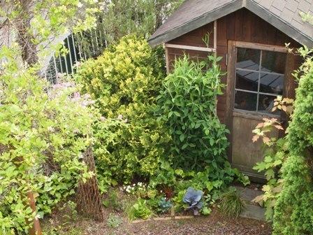 my-garden 064