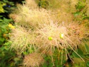 my-garden 071