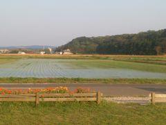 【写真】田植え作業が終わったばかりの受付ハウス前の田んぼの様子