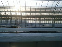 【写真】株抜き作業が終わった本圃ハウスに夕日が射し込んでいる様子