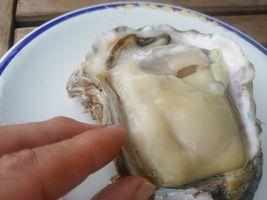 【写真】木更津・厚生水産 (富士見営業所)でいただいた大粒牡蠣