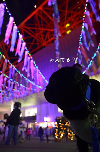 DSC_8513.jpg