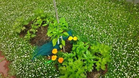 あかり花壇のはずの場所が・・・