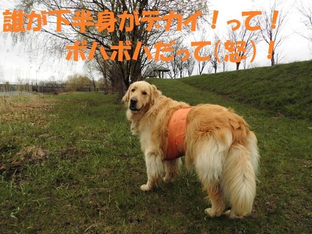 CIMG4783_P.jpg