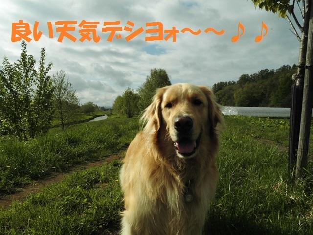 CIMG4868_P.jpg