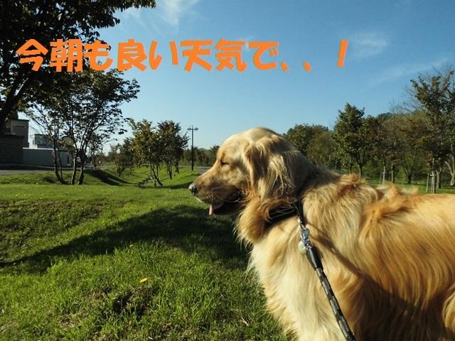 CIMG4870_P.jpg