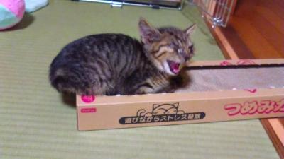 来た日の子猫