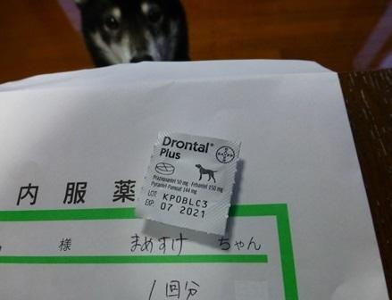 動物病院0415大起水産27