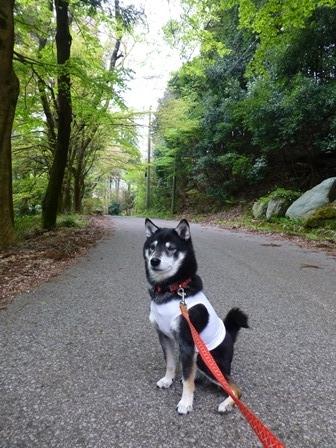 須賀谷温泉朝のお散歩11