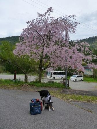 須賀谷温泉朝のお散歩21
