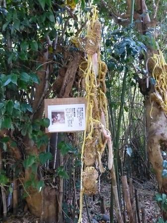 神明神社14