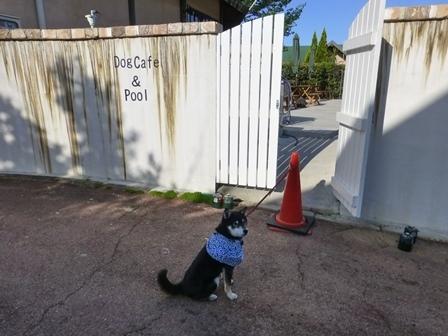 フィオーレ志摩朝のお散歩7