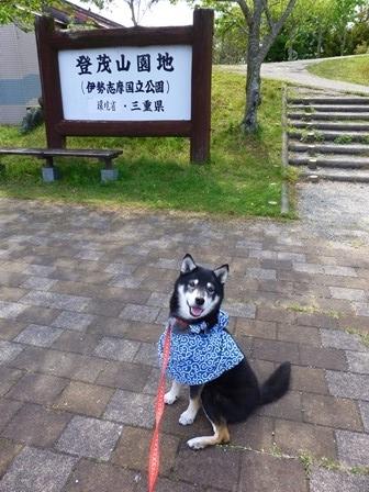 ともやま公園展望台15