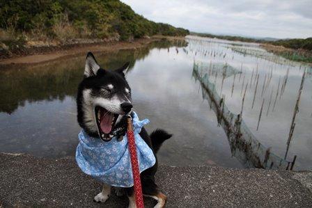 アクアヴィラ朝のお散歩 (8)
