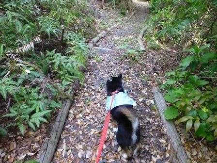 アクアヴィラ朝のお散歩 (52)