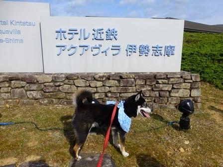 アクアヴィラ朝のお散歩 (53)