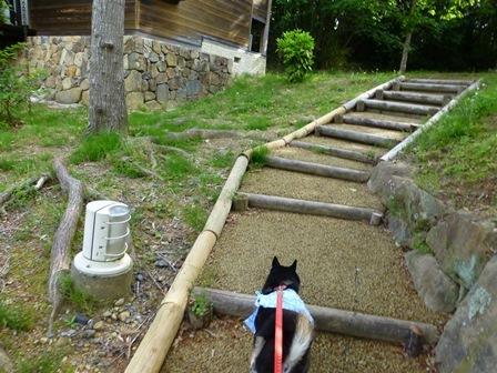 アクアヴィラ朝のお散歩 (58)