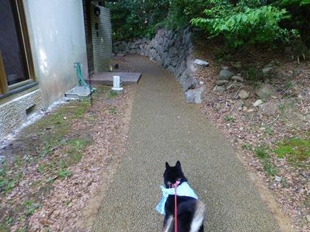 アクアヴィラ朝のお散歩 (59)