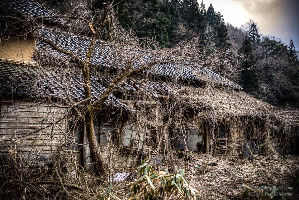 【廃墟】旧藤川邸_枯れ木と瓦屋根