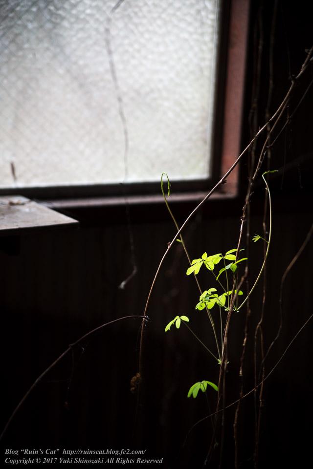 【廃墟】指宿ソーイング_植物