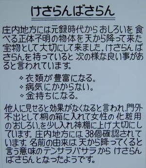 男鹿水族館 ケサランパ(バ)サラン説明書き