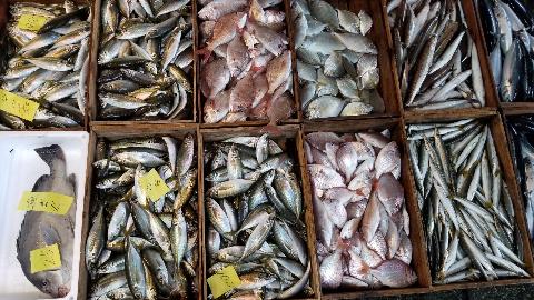 2018.10.4鮮魚