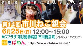 ichikawaneko14_320x180.jpg