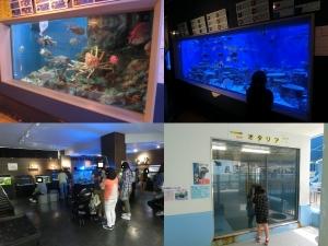 竹島常設2017-20-1