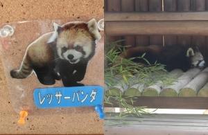 楽寿動物5