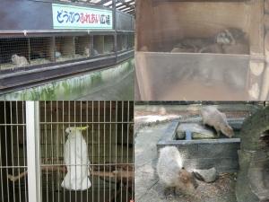 楽寿動物11-1