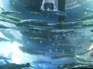 湧水の里水13