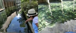 湧水の里水24