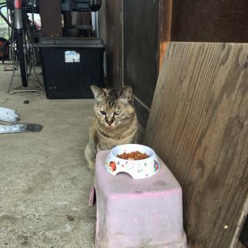 cat_84724_5.jpg