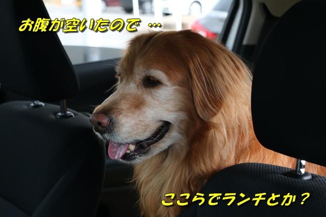 20170523102914c5c.jpg