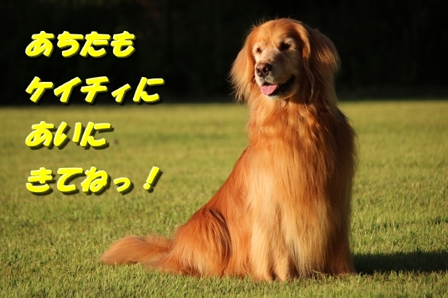 IMG_4359_201706271227380f5.jpg